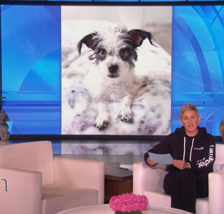 Ellen Rates Adoptable Dogs